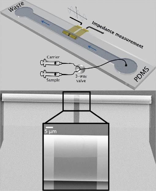Impedemetric sensing of ionic fluids and single cells in a single microtube